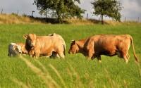 AGEV: Agrarwende in der Diskussion